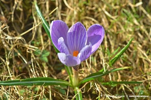 009-©-Palpung-Europe-www.palpung.eu