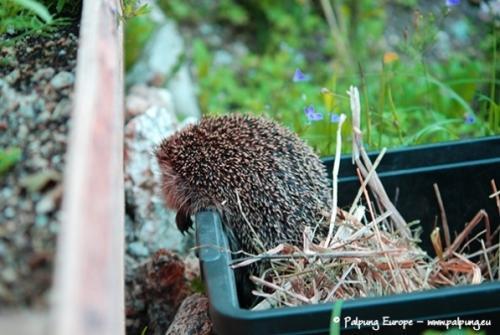071-©-Palpung-Europe-www.palpung.eu