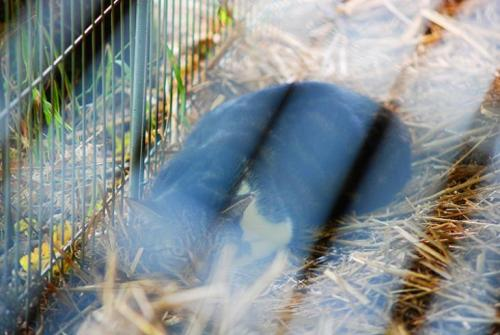 076 © Palpung Europe - www.palpung.eu